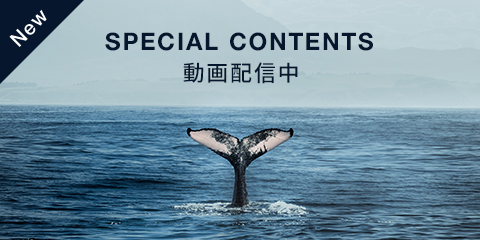 NEW SPECIAL CONTENTS 動画配信中